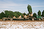 Loading Evergreen Trees On Trailer for Delivery